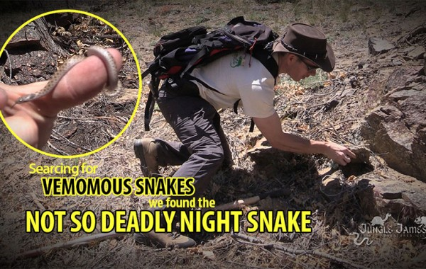 Are all venomous snakes dangerous to humans?